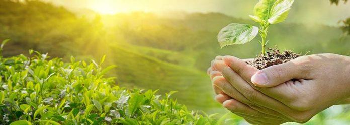 Ο χαλκός εχει ενα βασικό στοιχείο που παραδοσιακά χρησιμοποιείται σαν υλικό για φυσικη προστασία πολλών καλλιεργειών από ασθένειες, αλλά και σαν λίπασμα για τα φυτά.