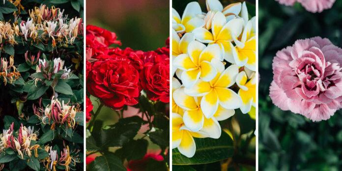 Λουλούδια με έντονο άρωμα που μυρίζουν υπέροχα