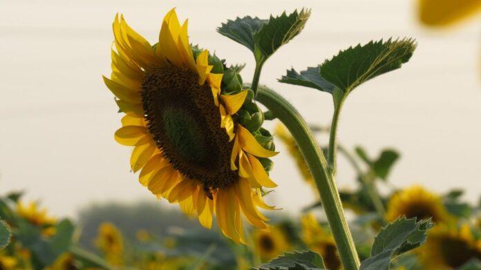 Ακολουθώντας μερικές απλές συμβουλές, μπορούμε να βοηθήσουμε τον κήπο μας