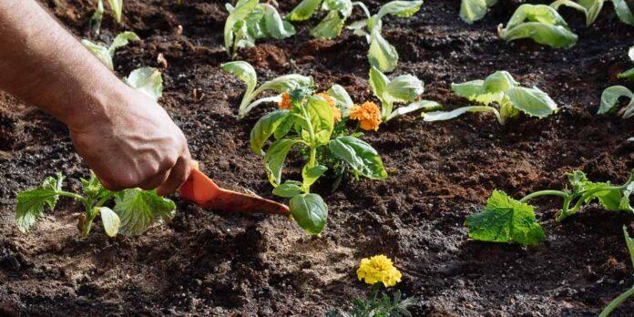 Φυτεύουμε καλοκαιρινά κηπευτικά στον λαχανόκηπο