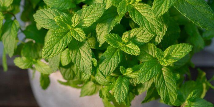 Αρωματικά φυτά στο μπαλκόνι σας!!!